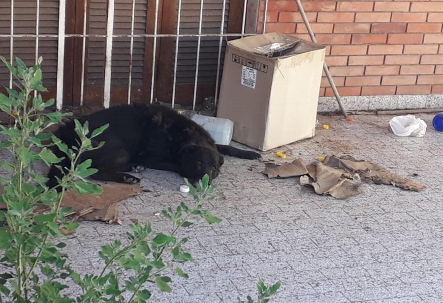 Bermúdez: Debieron romper el portón de una casa para rescatar a perrito en grave estado de abandono